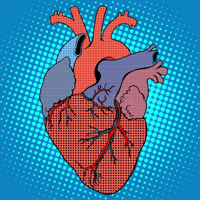 Stil för mänsklig hjärta för anatomi retro vektor illustrationer