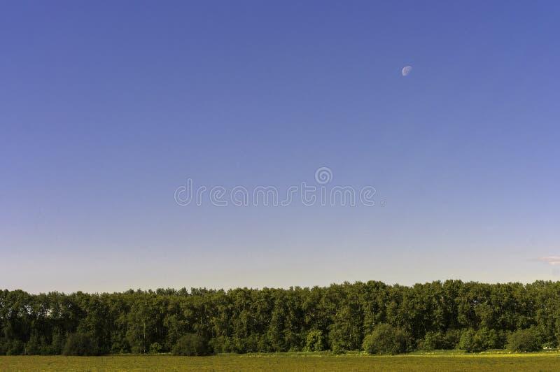 Stil landschap stock foto's