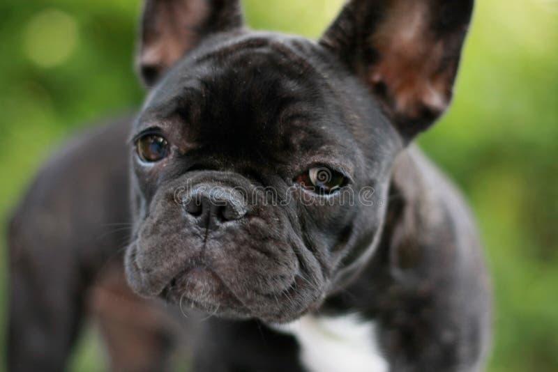 stil puppy stock foto's