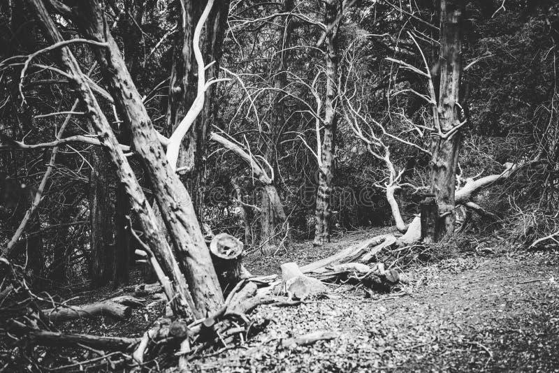 Stil Weergeven van Bospark in Groot-Brittannië Rebecca 36 stock foto's