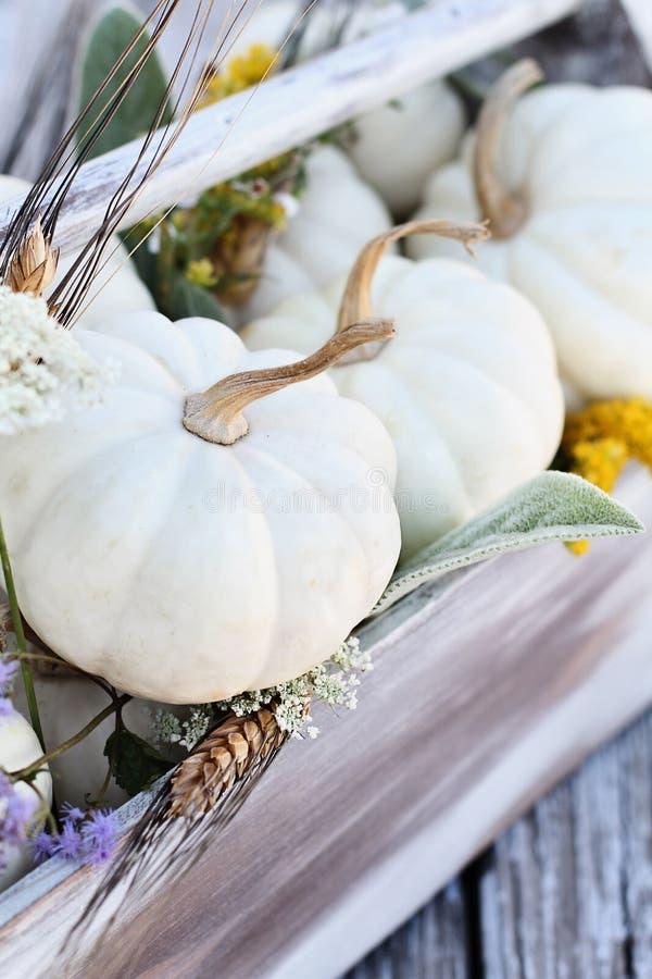 Stile Autumn Toolbox Table Decor della fattoria fotografie stock libere da diritti