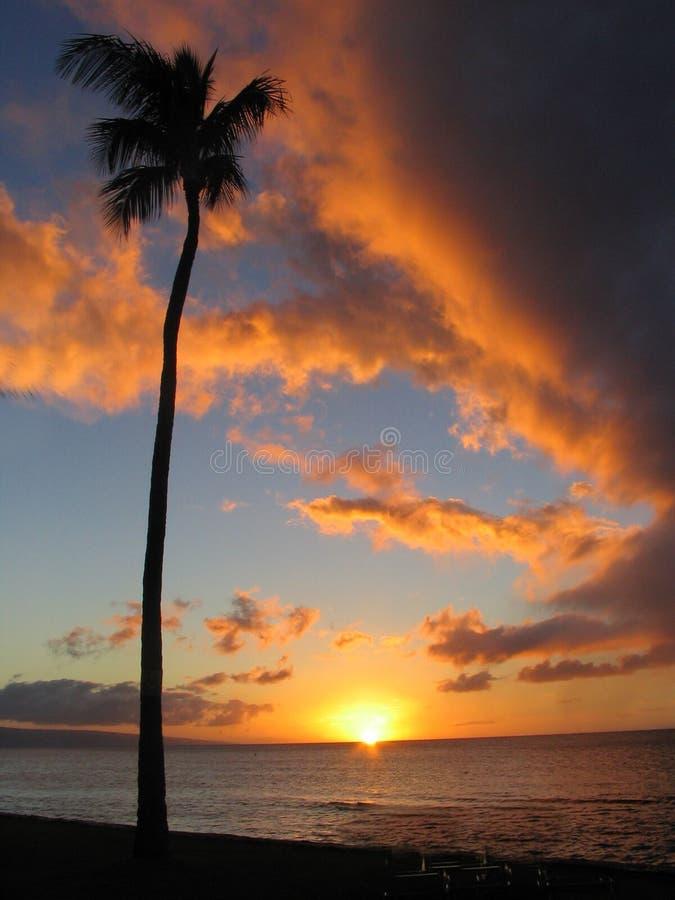 Stile del Maui di tramonto immagine stock