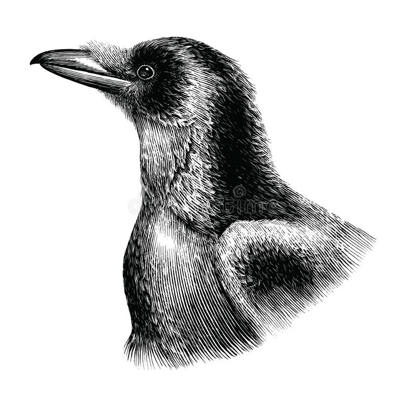Stile dell'annata del disegno della mano del corvo illustrazione di stock