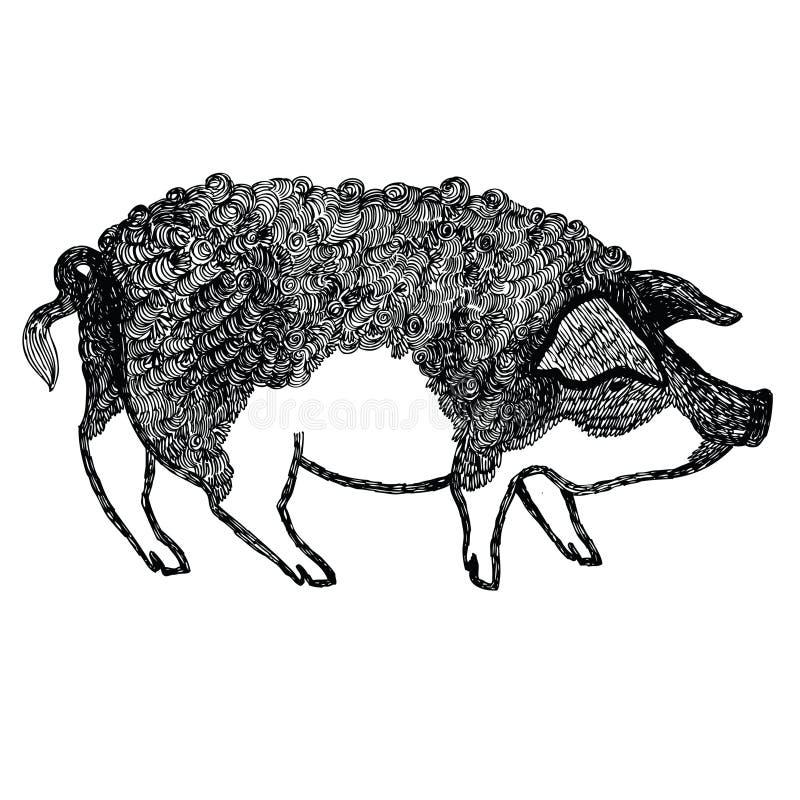 Stile di schizzo dell'illustrazione di vettore del maiale di Mangalica disegnato a mano illustrazione di stock