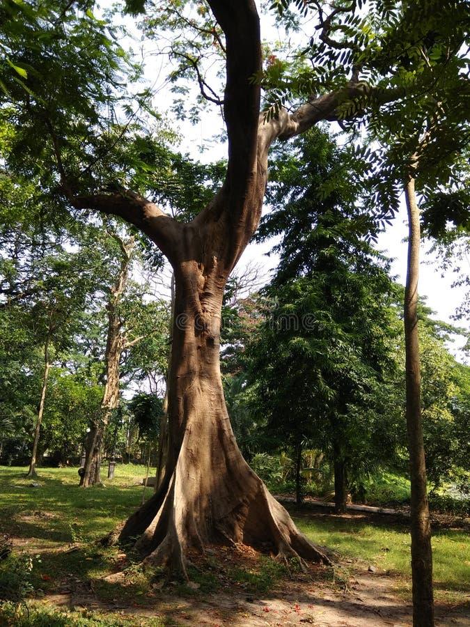 Stile differente dell'albero fotografia stock libera da diritti