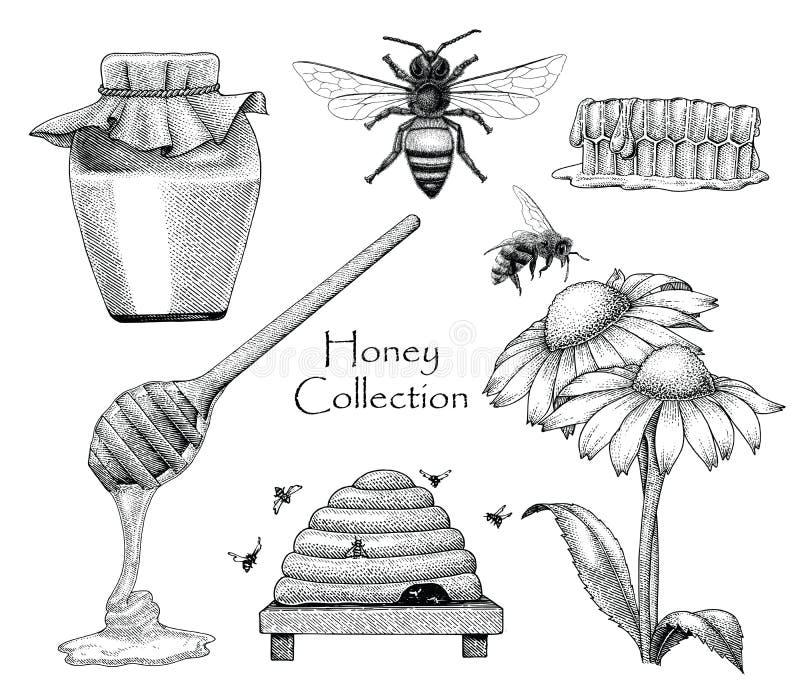 Stile stabilito dell'incisione del disegno della mano della raccolta dell'ape sul backgro bianco royalty illustrazione gratis