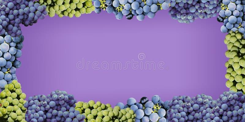 Stile succoso dell'uva su un fondo porpora fotografia stock libera da diritti