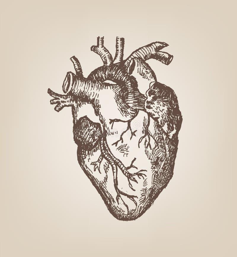 Stile umano di schizzo della mano del cuore Clipart editabile d'annata illustrazione di stock