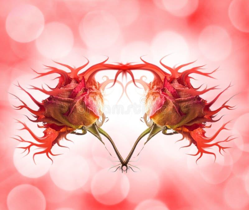 stilfull hjärtarose arkivbilder