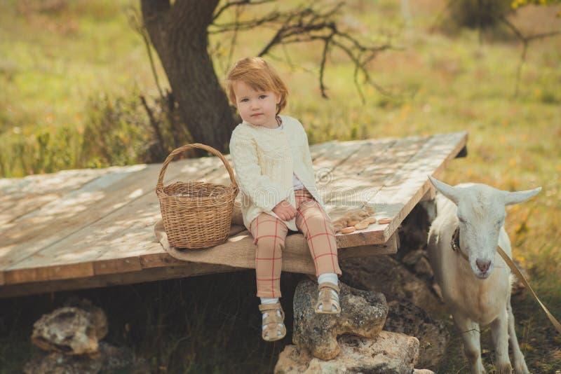 Stilfull iklädd tröja för flicka utmärkt med blont hår som spenderar tid i by med korgen som är full av äpplen som matar djur get fotografering för bildbyråer
