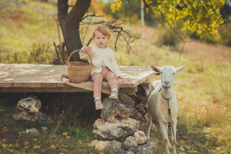 Stilfull iklädd tröja för flicka utmärkt med blont hår som spenderar tid i by med korgen som är full av äpplen som matar djur get royaltyfri fotografi