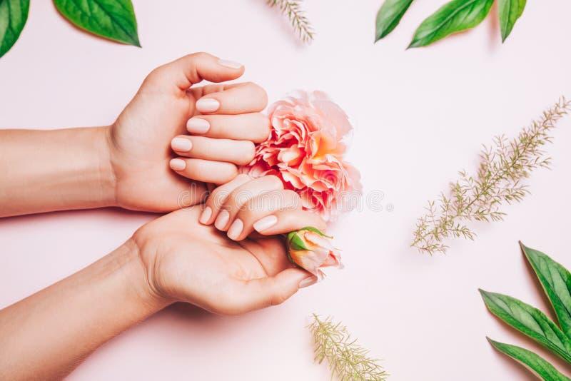 Stilfull moderiktig kvinnlig manikyr Kvinnans handinnehavet steg blomman på rosa bakgrund B?sta sikt, lekmanna- l?genhet arkivfoton