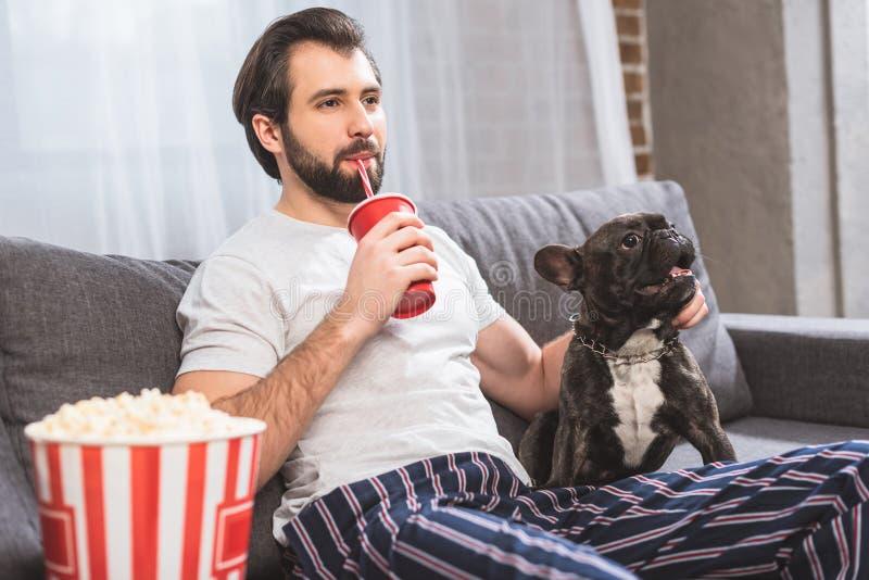 stilig enstöring som gömma i handflatan bulldoggen och dricker drycken på soffan arkivbild