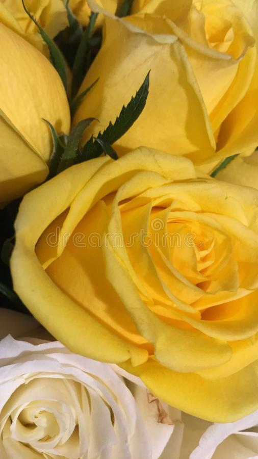 Stilig gul rosa bukett royaltyfria foton