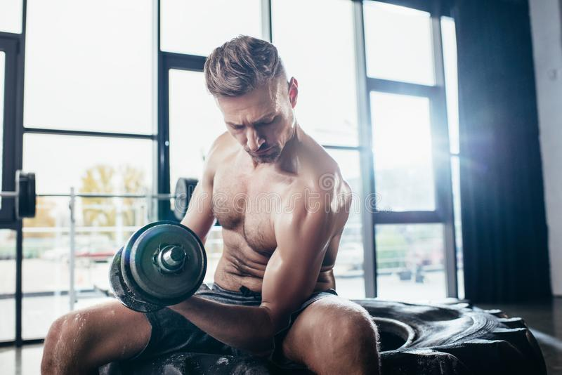 stilig shirtless idrottsman som sitter på gummihjulet och övar med i idrottshallhanteln och royaltyfri foto
