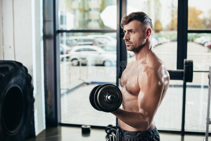 stilig shirtless svettig idrottsmanutbildning med hantlar royaltyfri foto