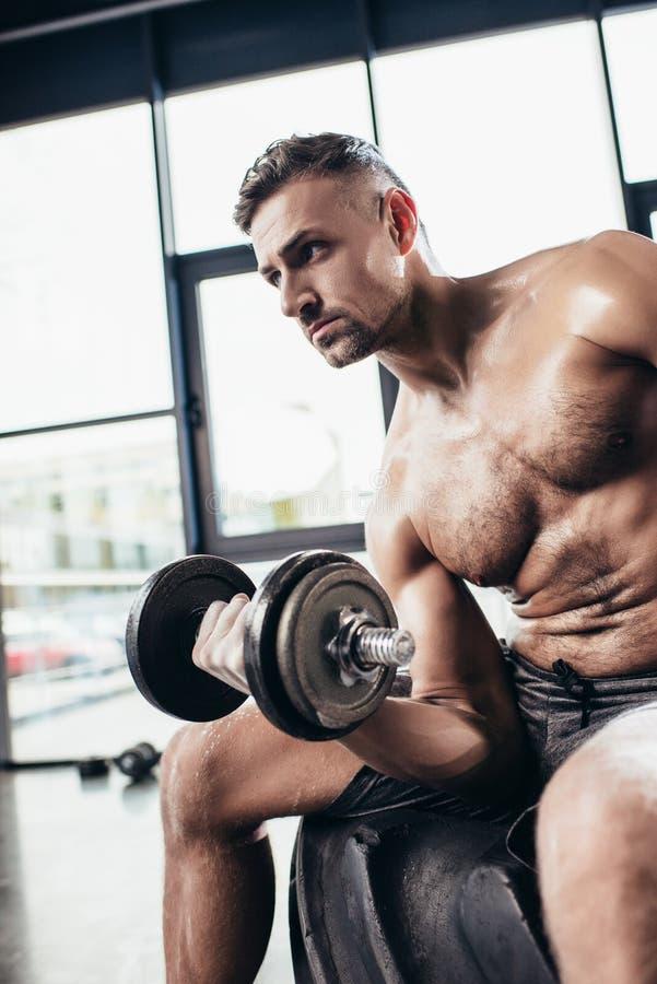 stilig svettig shirtless idrottsman som sitter på gummihjulet och övar med royaltyfri foto