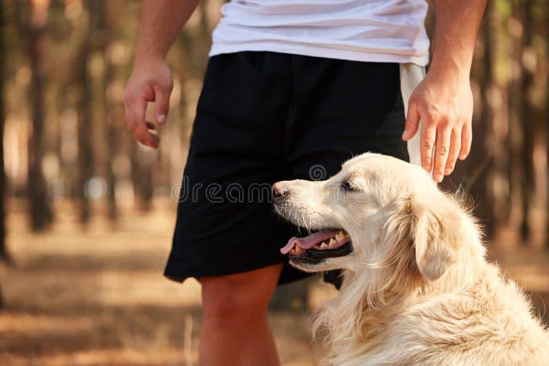 Stilig ung man med en labrador utomhus i skogen royaltyfria bilder