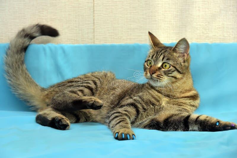Download Stilig Ung Strimmig Kattkatt Arkivfoto - Bild av härlig, katter: 76702658