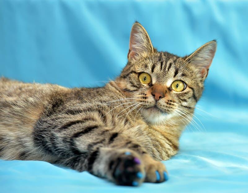 Download Stilig Ung Strimmig Kattkatt Fotografering för Bildbyråer - Bild av katt, hemhjälp: 76702989