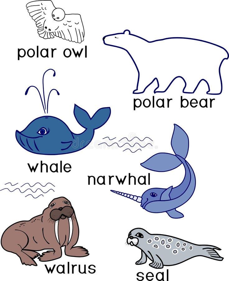 Stiliserad framlänges bild av polar bearSet av olika tecknad filmdjur av polara faunor på vit bakgrund med titlar royaltyfri illustrationer