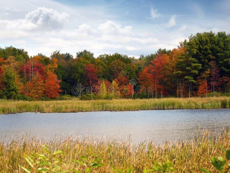 Still Autumn Lake stock images