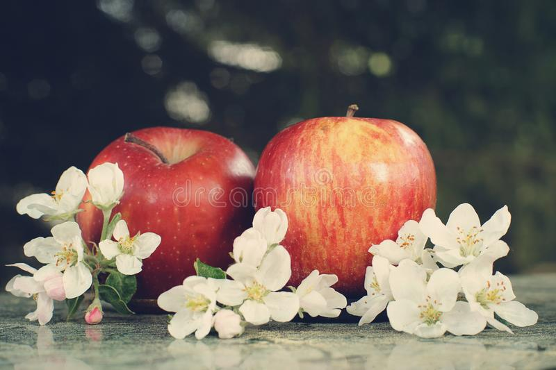 Still life with apples and delicate white flowers stock photos