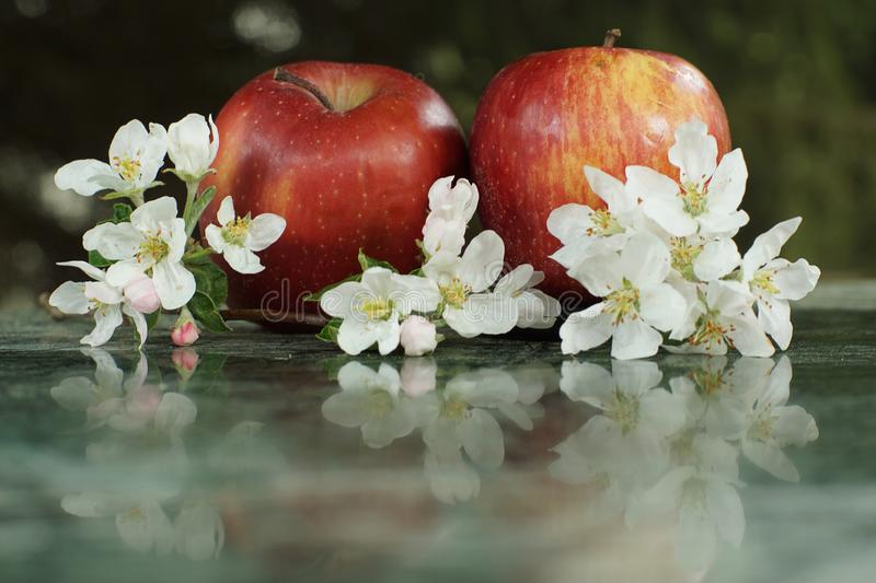 Still life with apples and delicate white flowers on a marble table royalty free stock photo