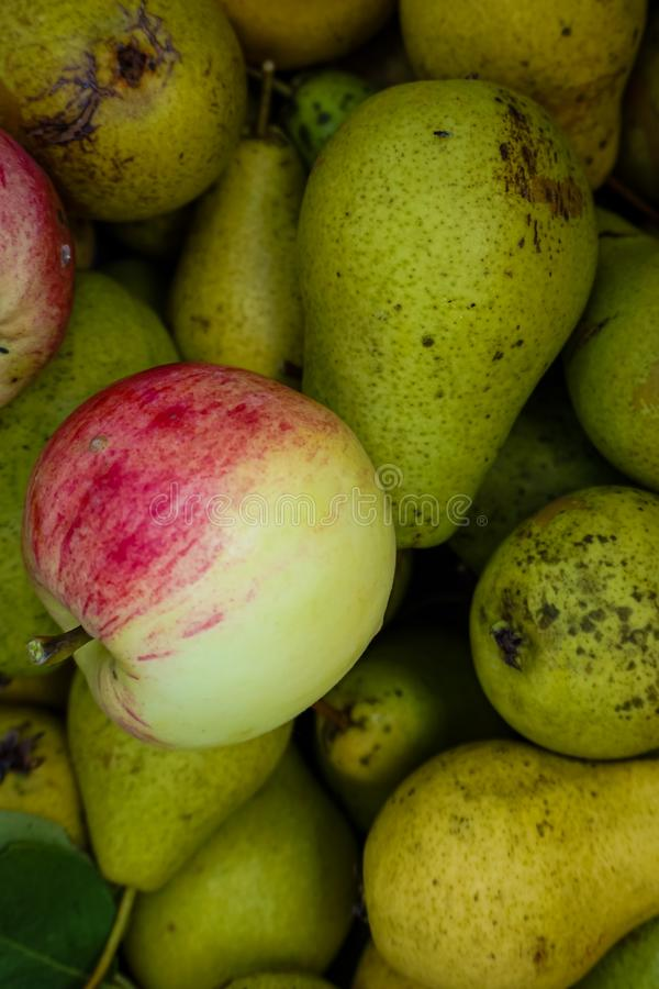 Still life of apples and pears stock photos
