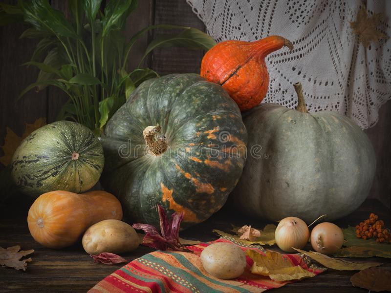 Still life autumn harvest with various types of pumpkins. And gourds on a table with vegetables and fall leaves for Thanksgiving royalty free stock image