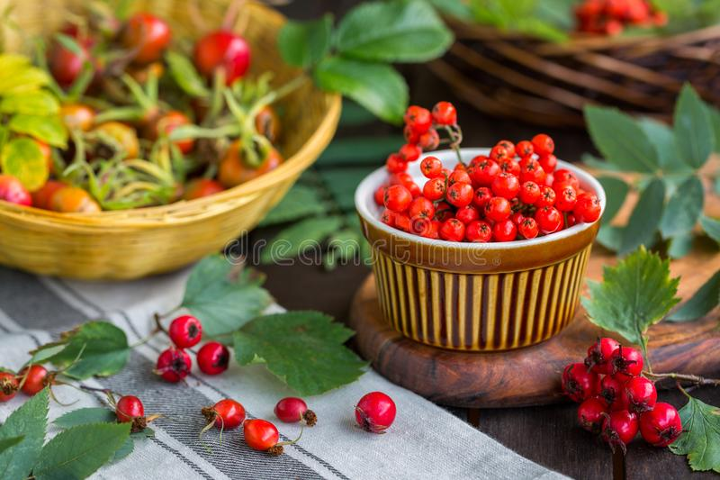 Still life with red autumn berries stock photography