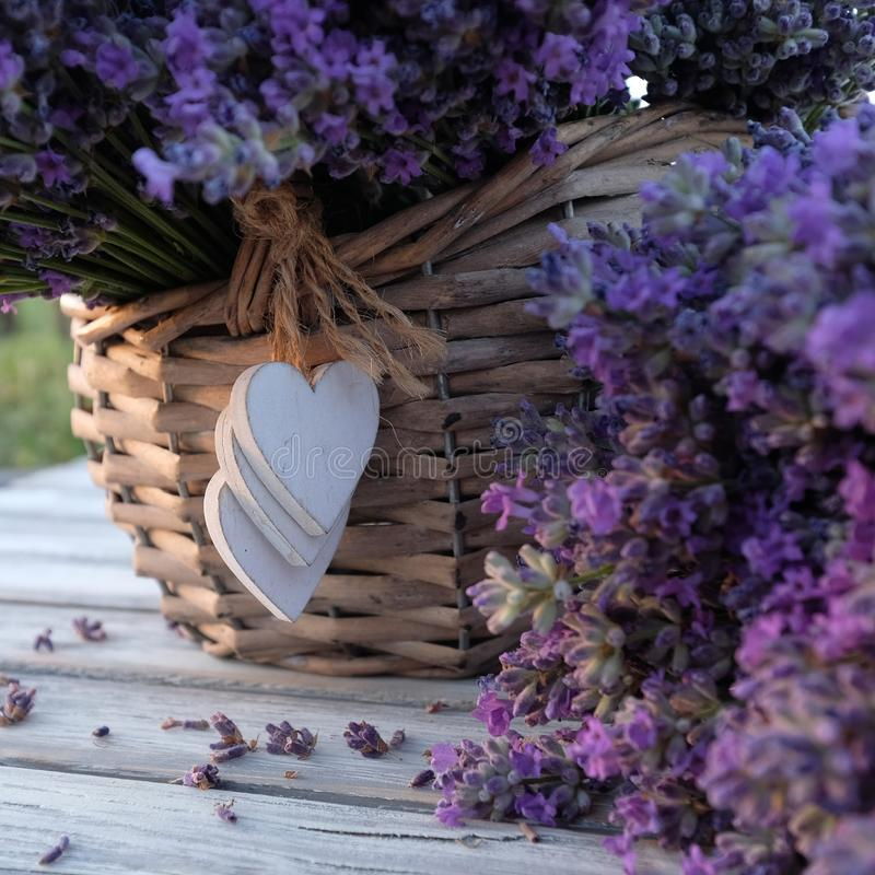 Still life with a basket of lavender royalty free stock photos