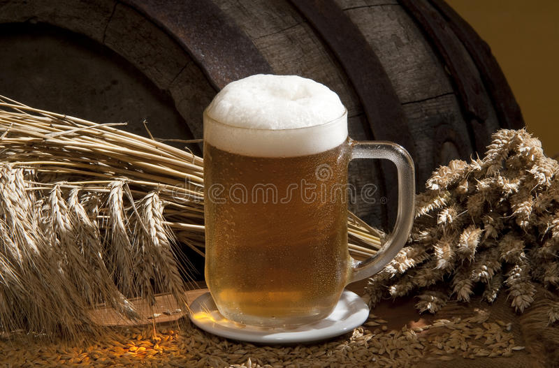 Still-life with beer royalty free stock photography