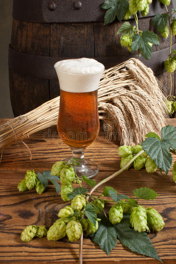 Still life with beer. And raw material for beer production royalty free stock photos