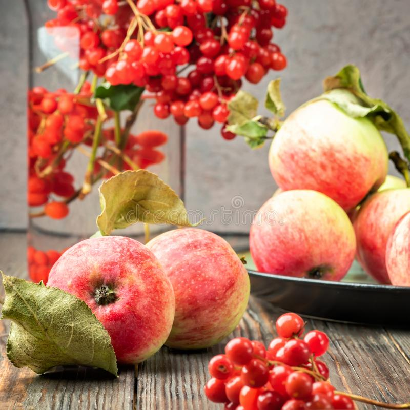Still life berries of a viburnum and garden seasonal apples in p. Lates on wooden table. Autumn concept food agriculture, harvesting, cooking royalty free stock photography