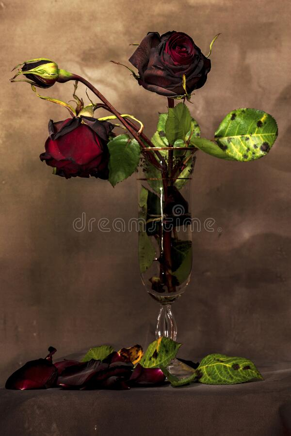 Still life with a bouquet of dried roses royalty free stock photo