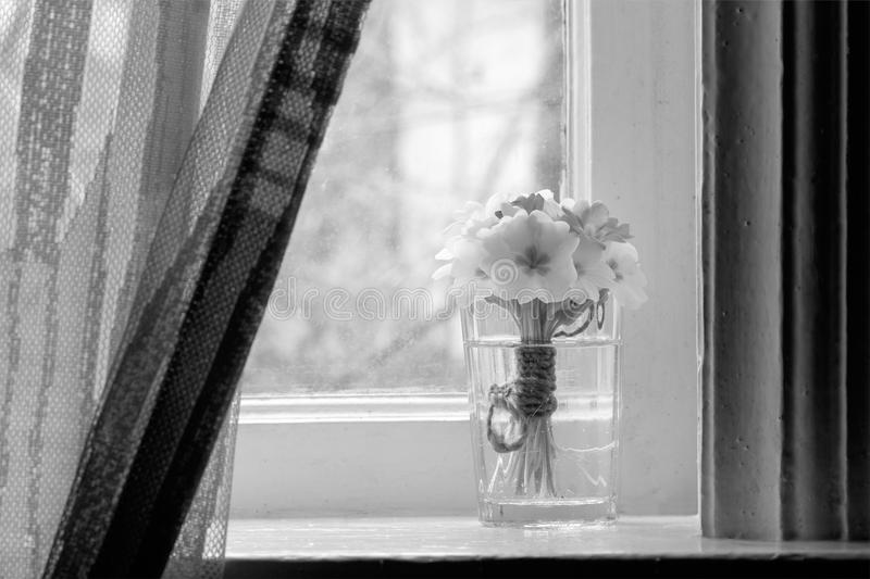 Still life a bouquet of primroses on the windowsill in a village house stock image