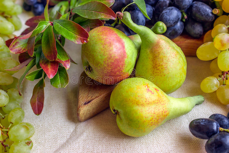 Still life - bright fruit on light fabric. Vintage black and green grapes, fragrant pear and pomegranate branch. stock image