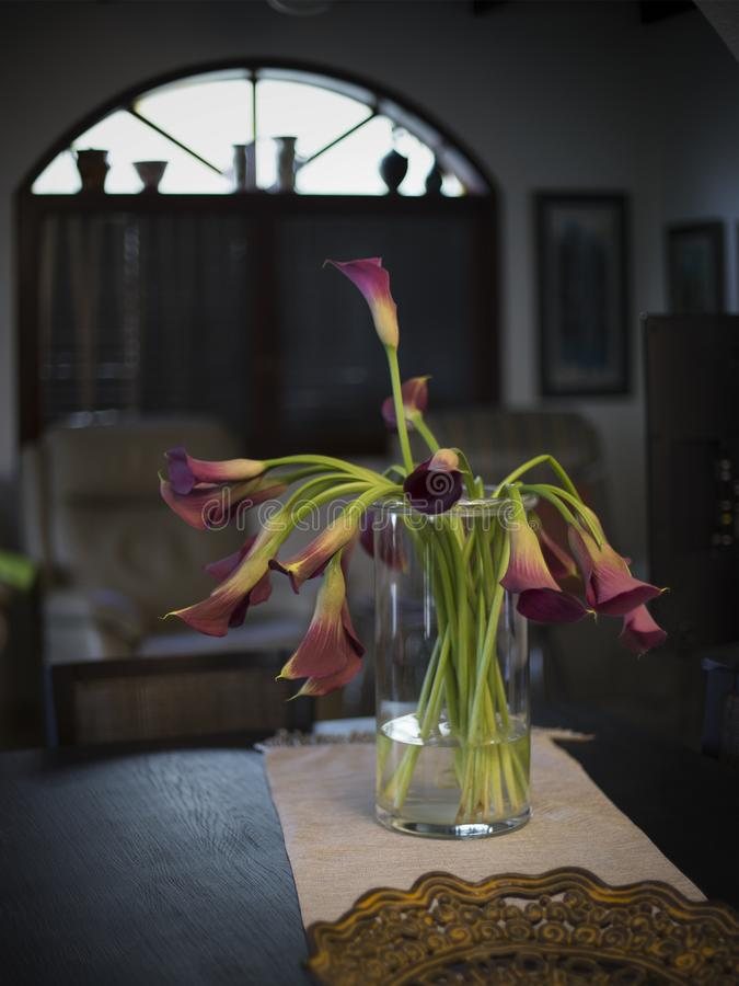 Still life with calla flowers in the room interior stock photography