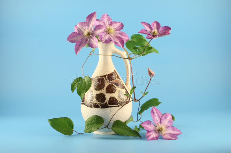 Still-life with clematis stock image