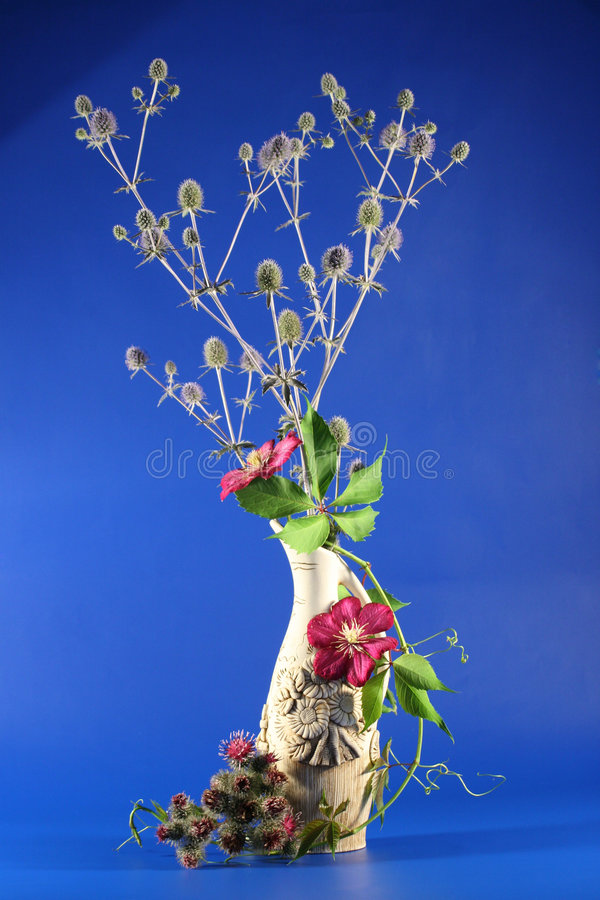 Still-life with clematis royalty free stock photo