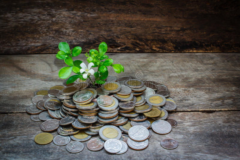 Still life coins and tree. royalty free stock photo