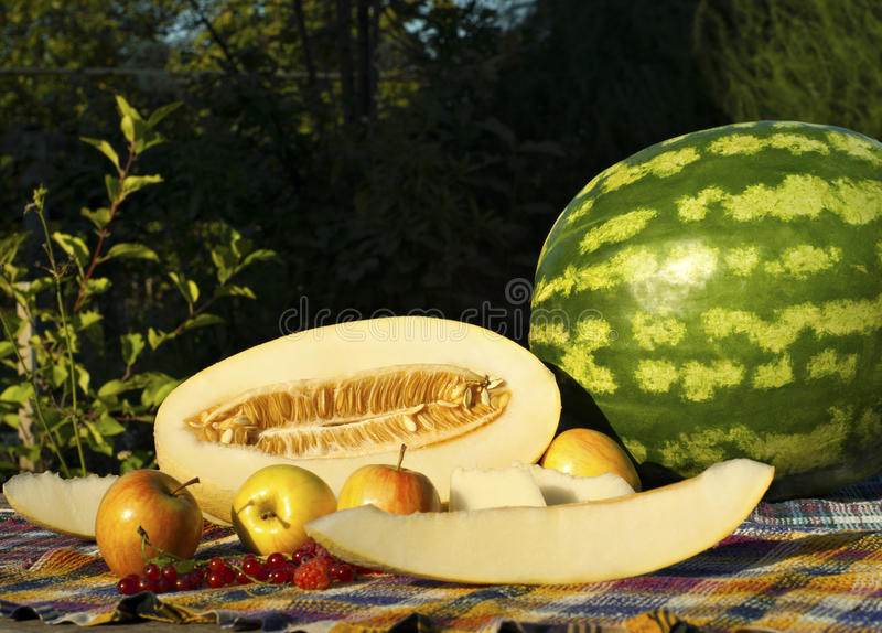 Still life with cut melon, melon slices, watermelon, apples, red currants and raspberries royalty free stock images