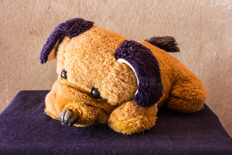 Good Bear Brown Adorable Dog - still-life-cute-dog-brown-doll-art-85173600  Picture_421422  .jpg