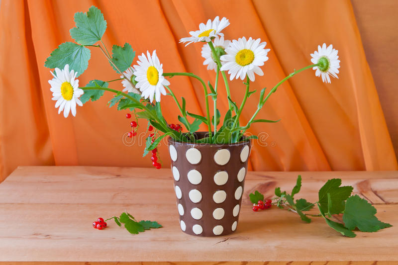 Still life with daisy flowers and red currant royalty free stock photos