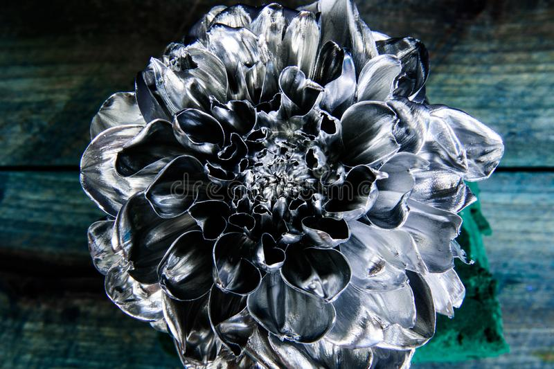 Still life fine art. floristics business. Vintage. wealth and richness. grunge beauty. luxury and success. metallized. Antique decor. silver chrysanthemum royalty free stock photos