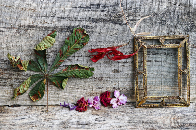 Still life with flowers, leaves and a brass picture frame. On wooden background royalty free stock photography