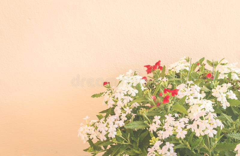 Still life with flowers on wall background royalty free stock image