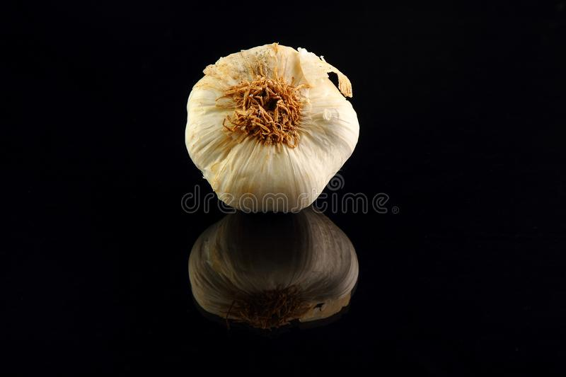Still life of garlic bulb in dark black background with copy space, royalty free stock photos