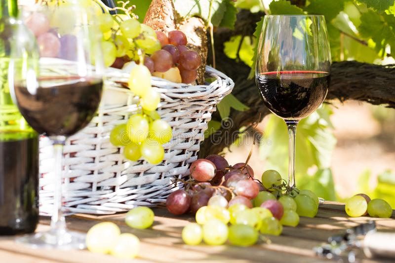 Still life with glass of red wine grapes and picnic basket on ta. Ble in field stock photography